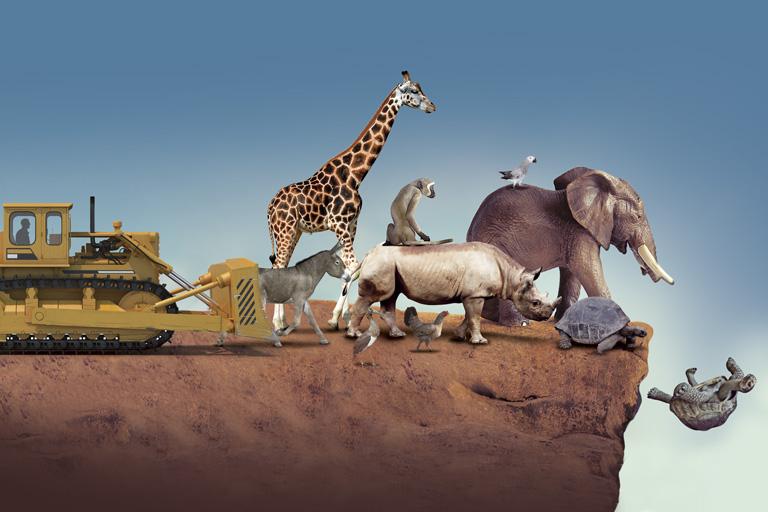 Resultado de imagen para Extinción de especies