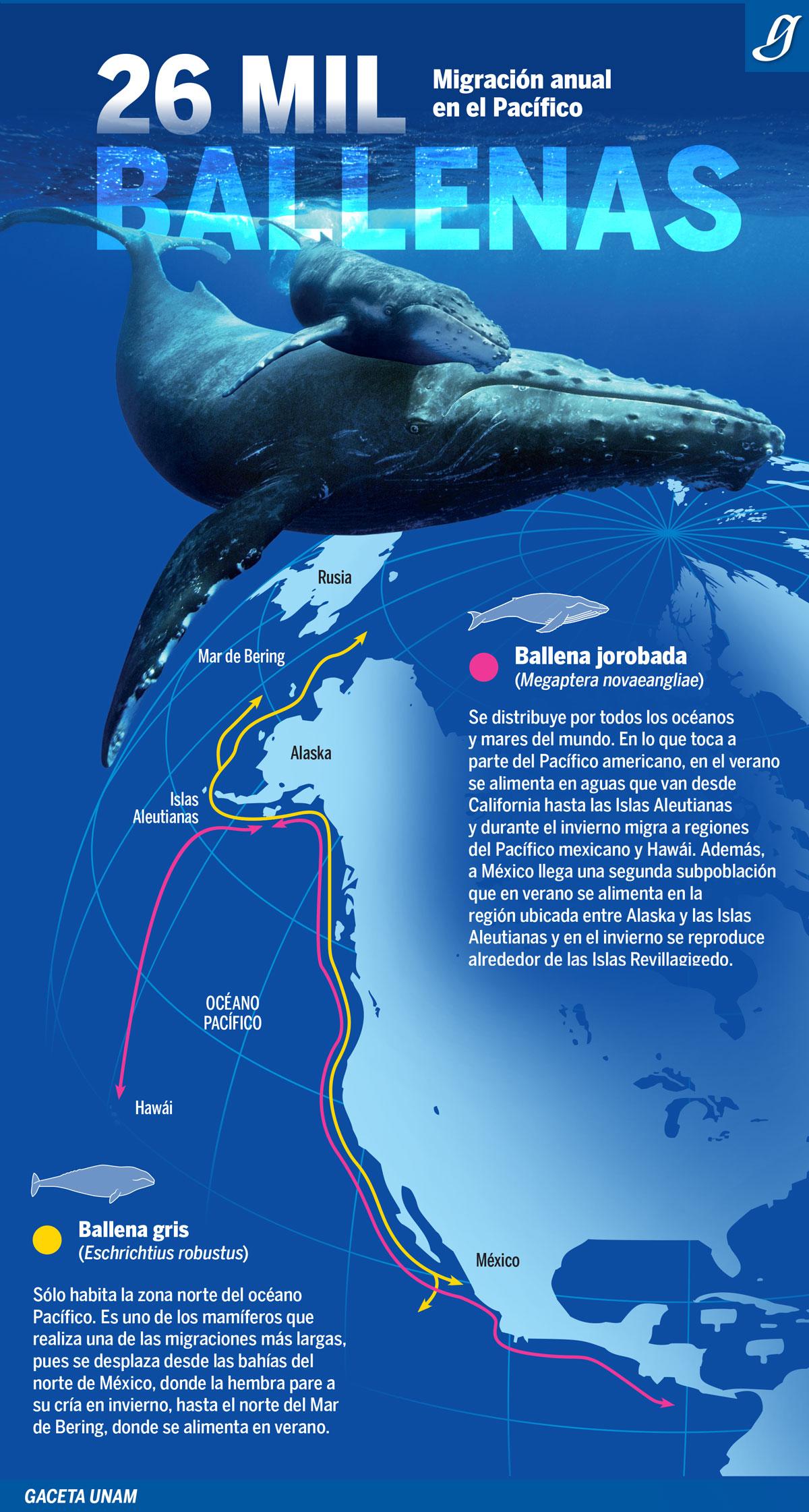 190121-info-ballenas