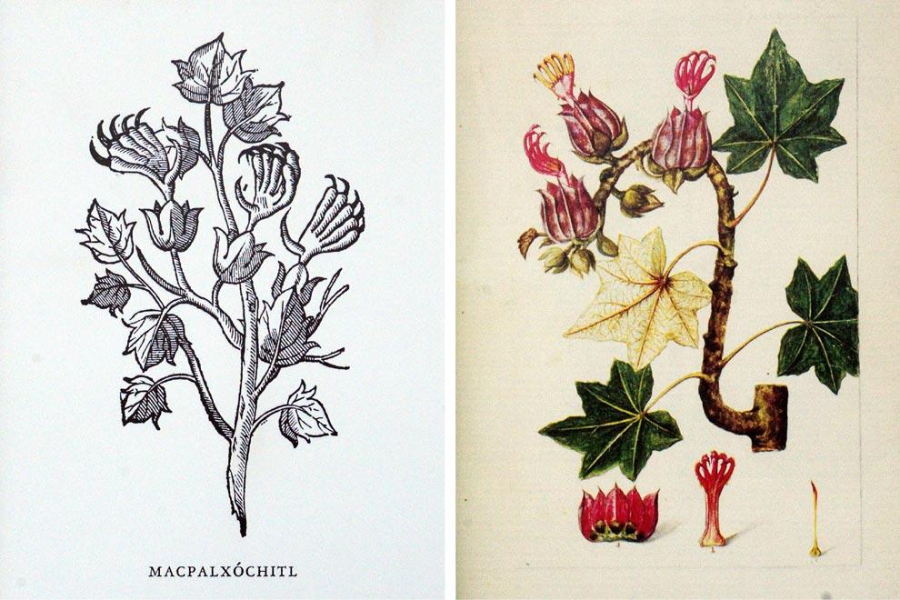 190408-com4-f3-jardin-botanico