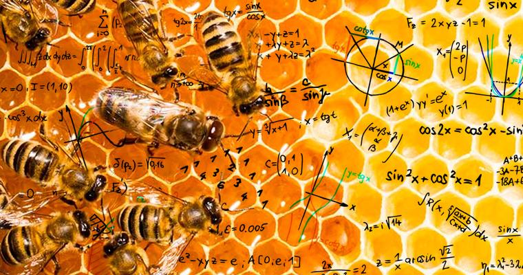 abejas_y_matematicas