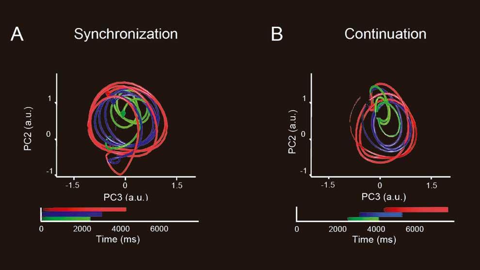 Al procesar la información analizaron la actividad de cientos de neuronas que fue proyectada en un espacio de dos dimensiones, obteniendo una señal neuronal que forma una trayectoria circular por cada intervalo en la secuencia rítmica de la tarea.