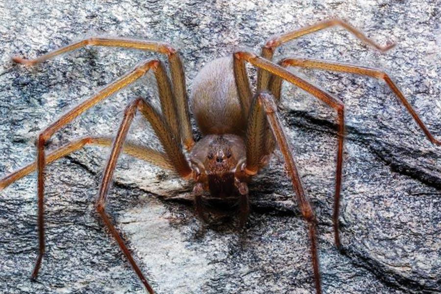 Resultado de imagen para gaceta UNAM araña