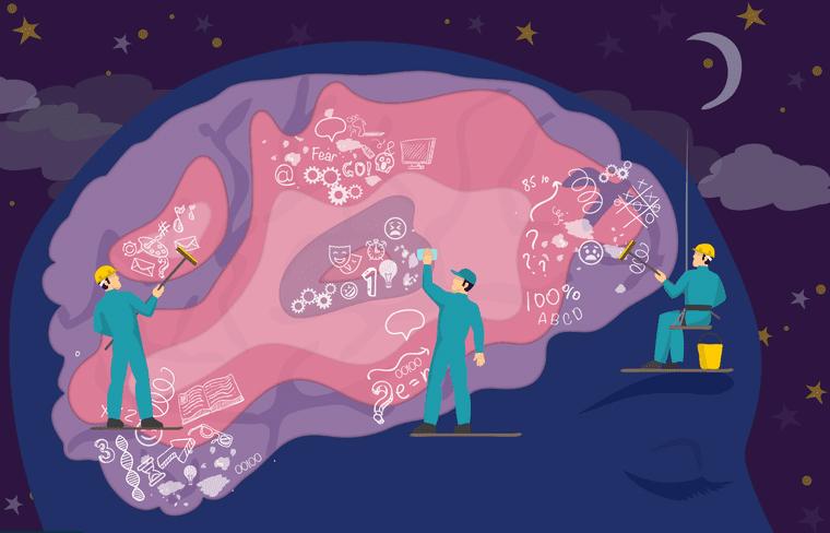Hay que dormir y soñar; fortalecen el cerebro - Gaceta UNAM
